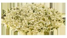 hemp-seeds